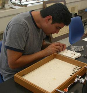 students>students pinning specimens for 4H collections.jpg